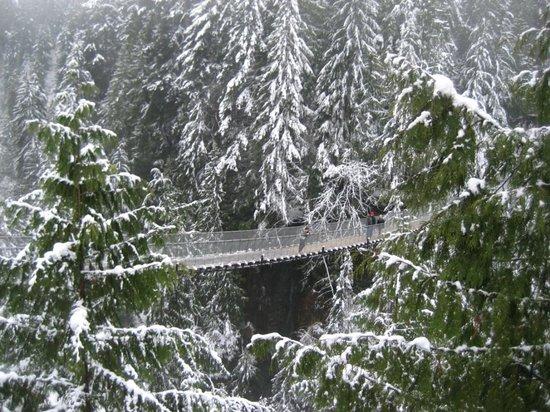 Parque y Puente colgante de Capilano: Capilano Suspension Bridge