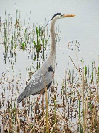 Ritch Grissom Memorial Wetlands: Wildlife