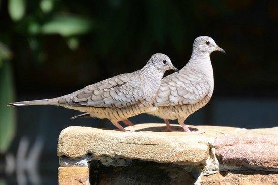 Villas Kalimba: Birds by the pool
