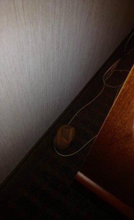 Baymont Inn & Suites Freeport : Nylons