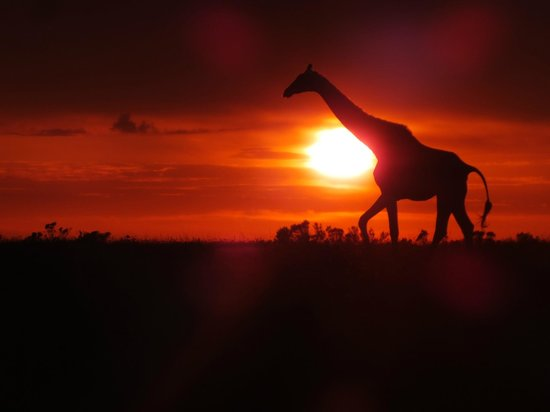 Kichaka Luxury Game Lodge : Giraffe at dawn!