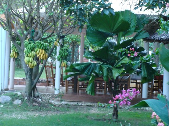Rancho Don Cesar: fresh fruit from the garden every breakfast