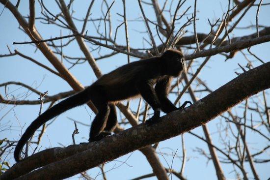 Buena Vista Surf Club: Just monkeying around!