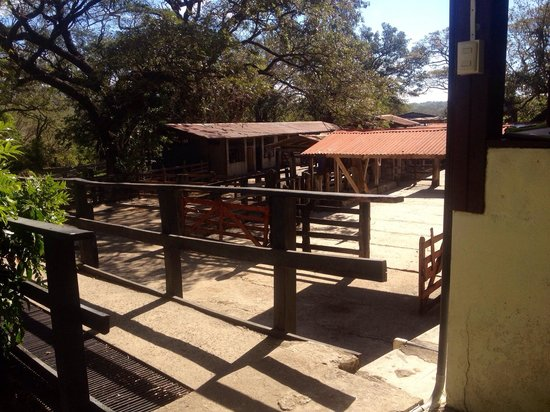 Hacienda Guachipelin: Establos