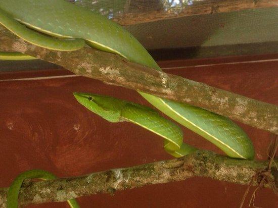 Hacienda Guachipelin: Serpentario