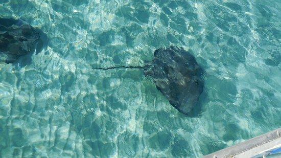Six Senses Cayman Adventures : Stingray