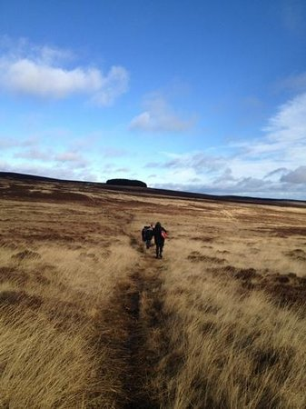 Footsteps - Walking the beauty of Northumberland: Bewick Moor