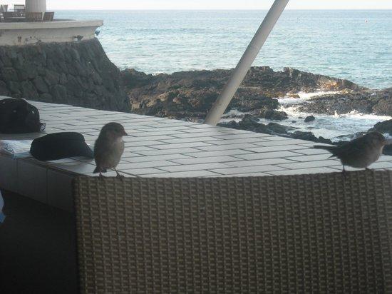 Royal Kona Resort: Company at breakfast