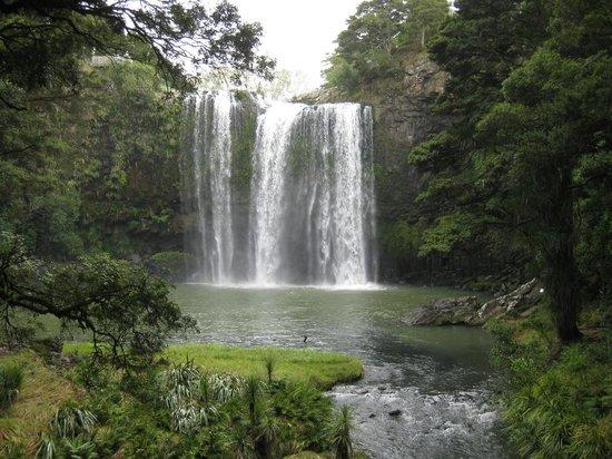 Whangarei Falls : Beautiful Falls close to the city.