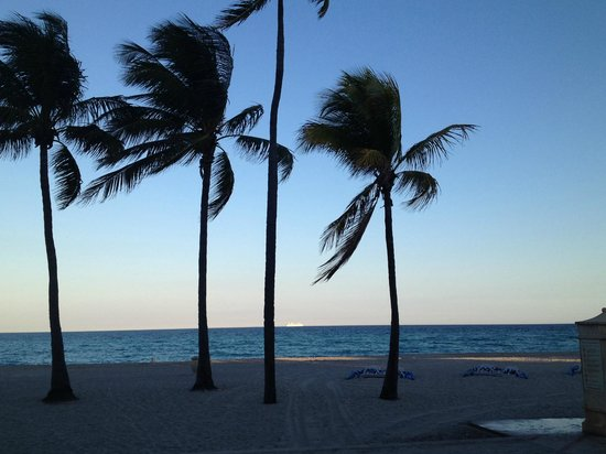 Hollywood Beach Marriott: Palm trees on the beach