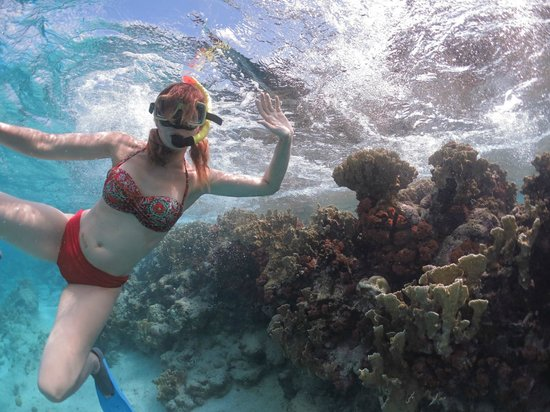 Sea Cow Snorkeling Trips: Bonaire Snorkeling with Sea Cow Snorkeling excursions