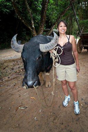 Siam Safari : Ox