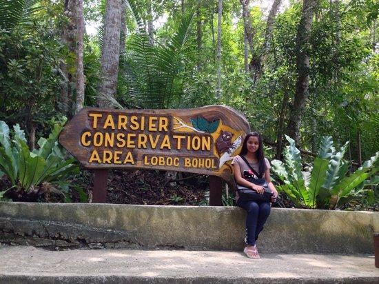 Tarsier Conservation Area: JP, September 2013