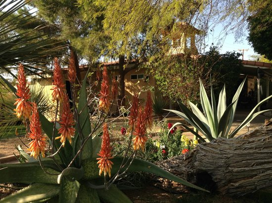 Hacienda Hot Springs Inn : The Garden