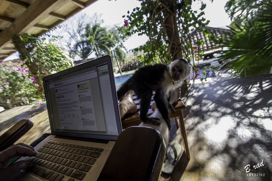 Finca Las Nubes: Monkey checking email with me