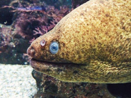 Shedd Aquarium: Eel