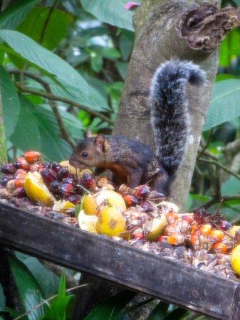 The Lodge and Spa at Pico Bonito: Squirrel Feeder
