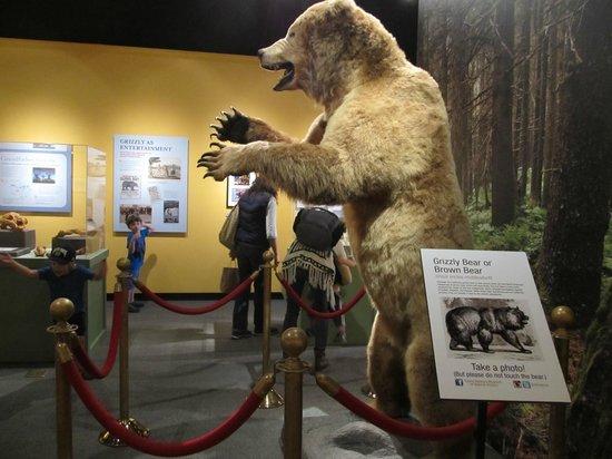 Santa Barbara Museum Of Natural History Admission