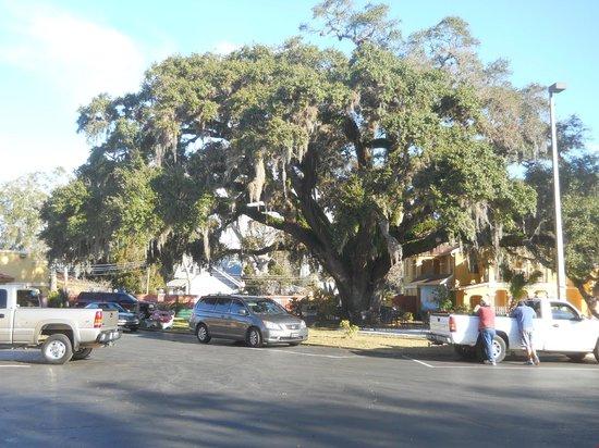 Howard Johnson Inn - Historic ST. Augustine FL: 600 years old