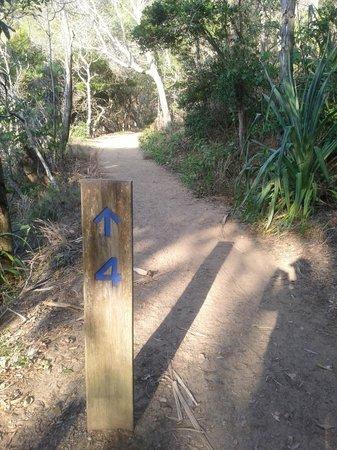 Noosa National Park: Walk track #4