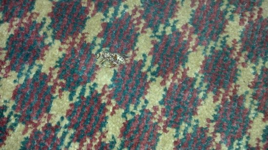 Days Inn Elk City : dead bugs