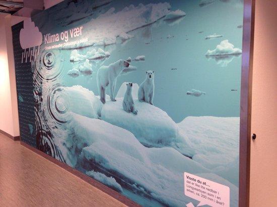 Nordnorsk Vitensenter: Polar bears display