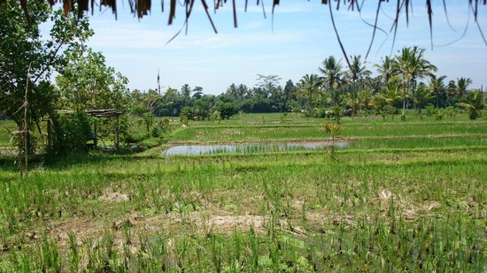 Bali River Tubing: Lunch overlooking padi fields