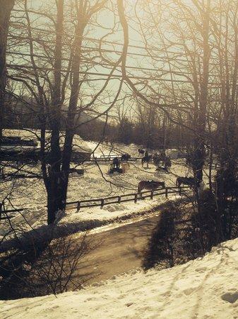 Pinegrove Family Dude Ranch: Horses