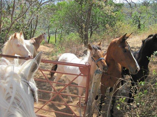 Finca Caballo Loco - Horse Tours Costa Rica : Babies