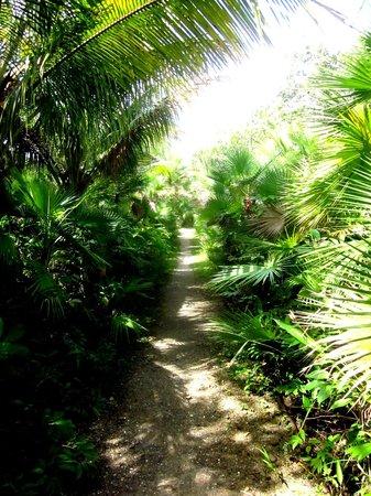 Orchid Garden Eco-Village Belize: paths
