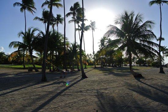 Gran Melia Golf Resort Puerto Rico: Beach