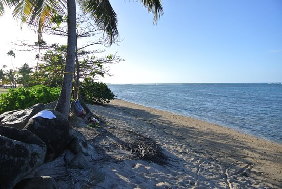 Gran Melia Golf Resort Puerto Rico : Rustic Beach