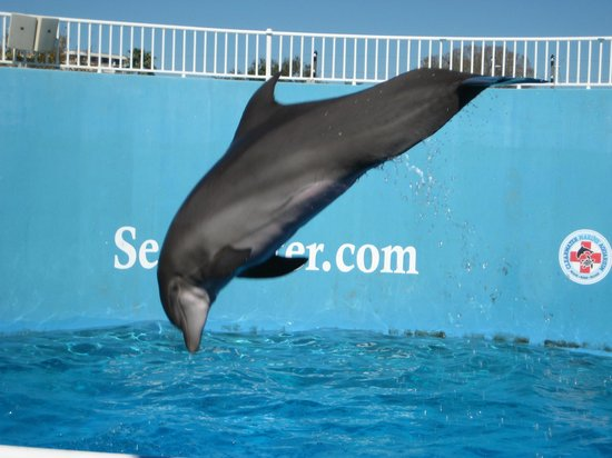 Clearwater Marine Aquarium: High flying dolphin
