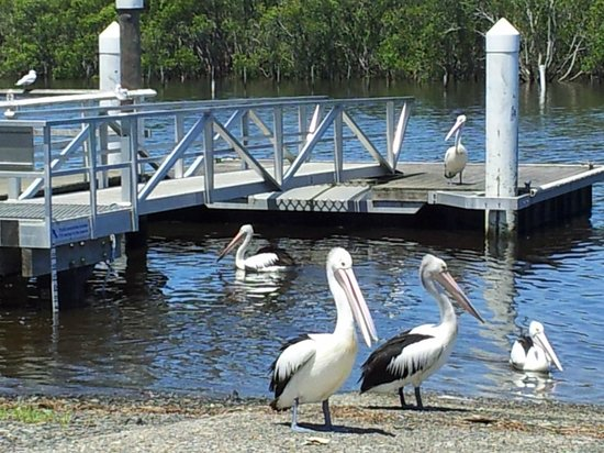 Harrington Village Motel : boat ramp and fishing jetty 300m from motel