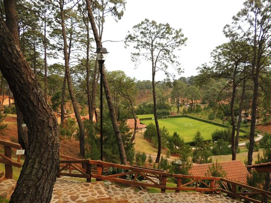 Hotel Bosque Escondido : Bosque