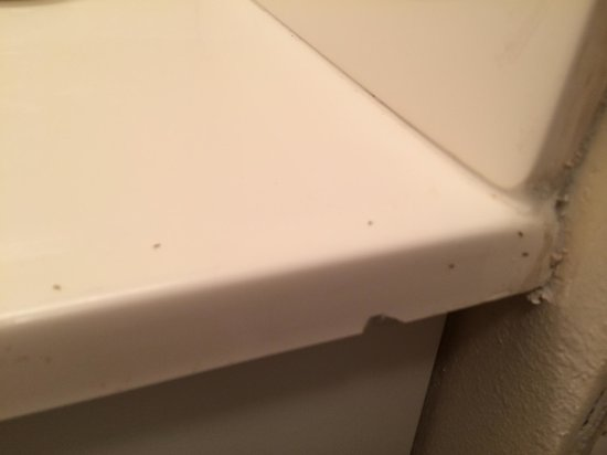 Crescent Arms Condominiums: Ants all over the bathroom counter. We had to keep our toothpaste in ziploc bags.