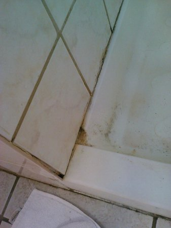 Royal Caribbean Resort: stained grout in shower stall