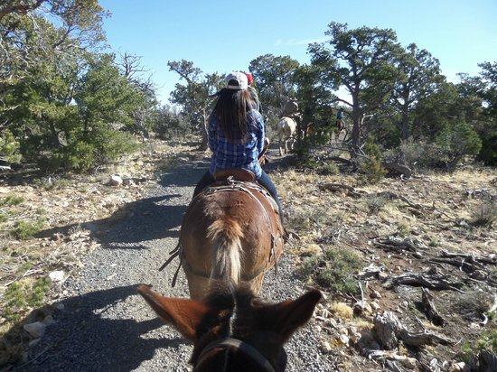 Grand Canyon Mule Tours by Xanterra: a safe pace