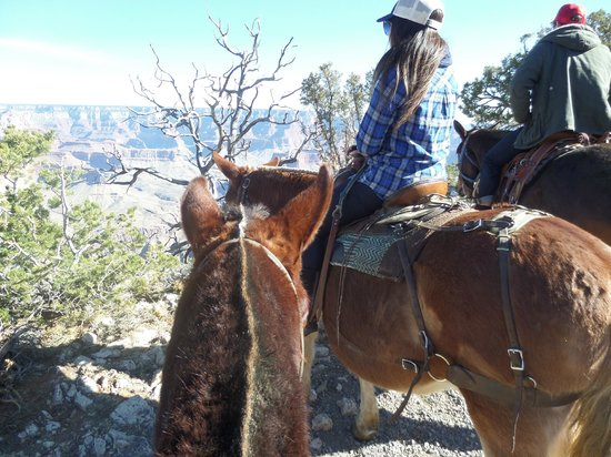 Grand Canyon Mule Tours by Xanterra: View of the Canyon