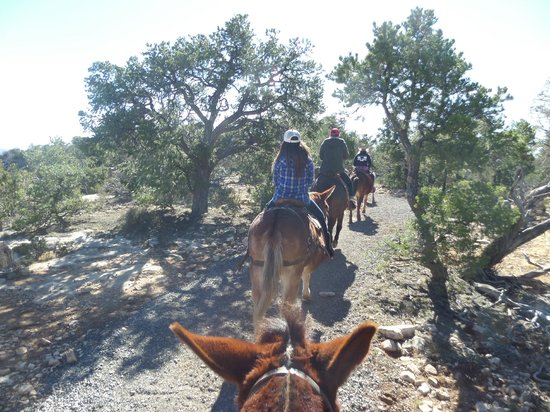 Grand Canyon Mule Tours by Xanterra: 10 mules long