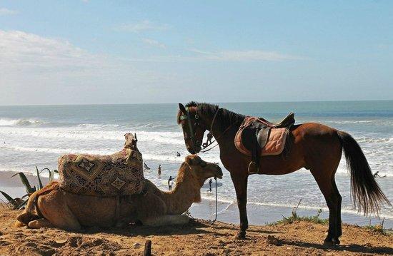 Surf Town Morocco : верблюдик и лошадка