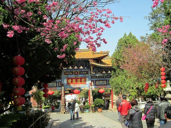 Yuantong Temple : Cherry blossoms (Mid-February.)