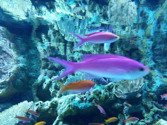 Aquarium De M Duses Photo De Aquarium Of The Pacific