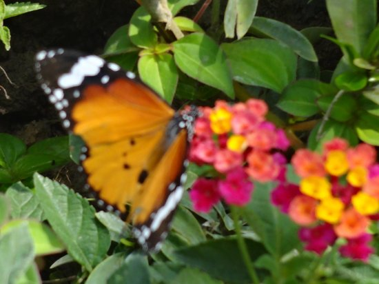 Mae Sa Orchid Farm: Butterfly on flowers
