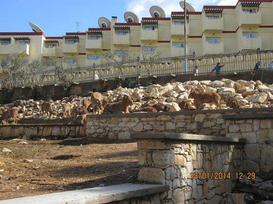 Vallee des Oiseaux: Goats, goats...
