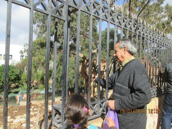 Vallee des Oiseaux: Feeding the goats