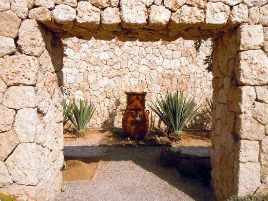 SENTIDO Reef Oasis Senses Resort : Cactus Garden