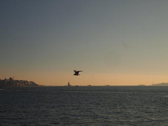 Bosporus: seagull