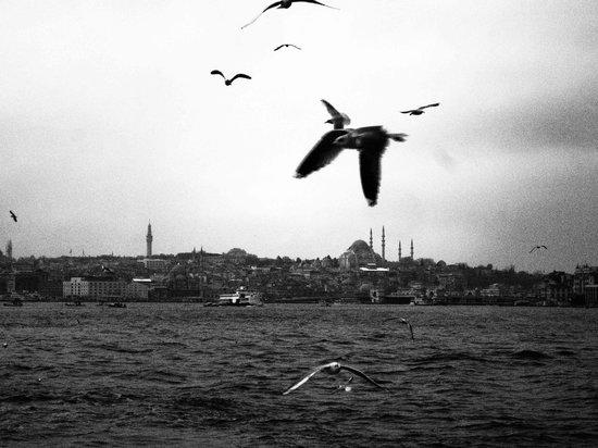 Bosporus: seagull2