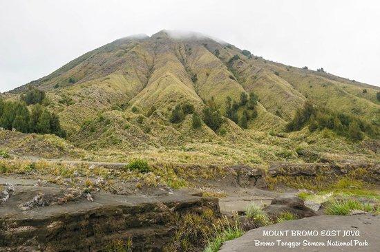 Lava View Lodge : Bromo